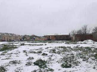 Nieve 8 enero_campo